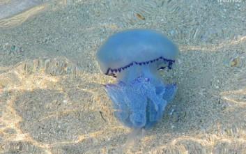 Τι να κάνετε αν δείτε μέδουσα στη θάλασσα