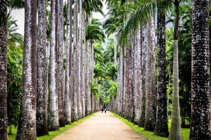 Rio-de-Janeiro-Garden5-980x651