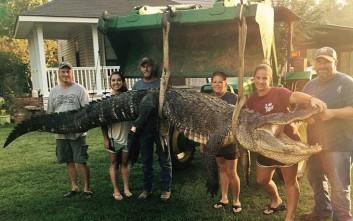 Γυναίκα κυνηγός έπιασε αλιγάτορα 300 κιλών