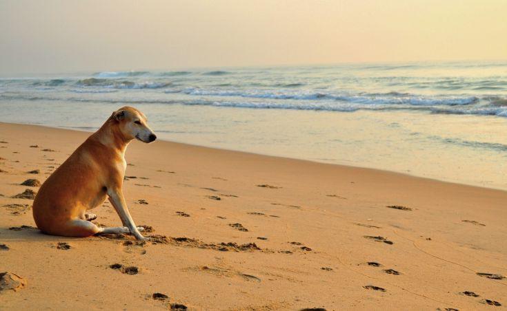 Τι ισχύει για τα σκυλιά στις παραλίες και το κολύμπι στη θάλασσα