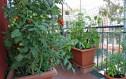 Τι λαχανικά να φυτέψετε το φθινόπωρο στον κήπο ή το μπαλκόνι σας