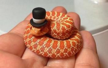 Τα πιο μικροσκοπικά φίδια που έχετε δει ποτέ