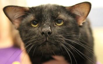 Ο αγαπησιάρης γάτος με τα τέσσερα αυτιά