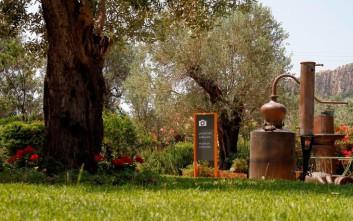 Ανακαλύψτε τον «Κόσμο του Ούζου» στο αποστακτήριο του Ούζου Πλωμαρίου Ισιδώρου Αρβανίτου