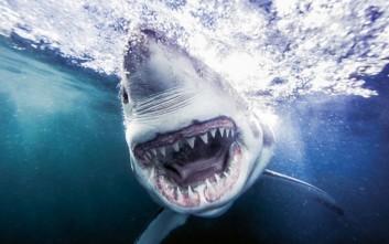 Φωτογράφος καταγράφει επί μία δεκαετία «πορτραίτα» καρχαριών