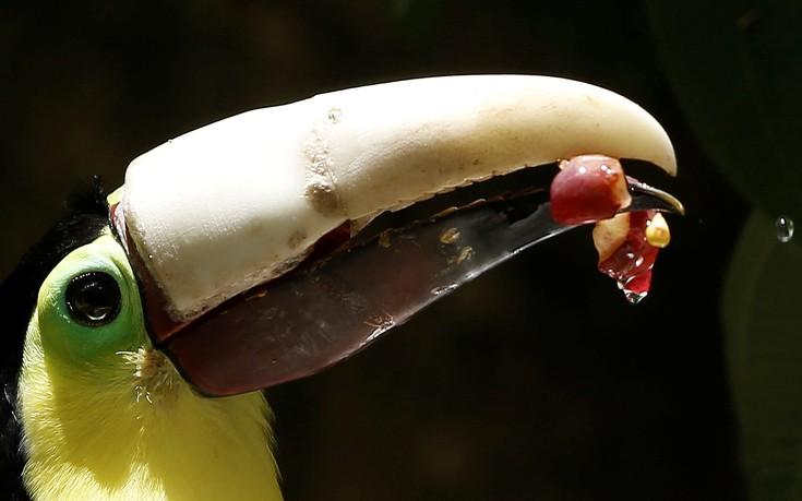 toucan1