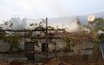 Τετρακόσια κουφάρια ζώων άφησε πίσω της η πυρκαγιά στη Θάσο