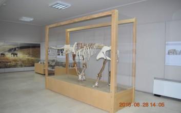 Στο Μουσείο Γεωλογίας ο τρισδιάστατος ελέφαντας της Τήλου