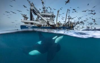 Οι καλύτερες φωτογραφίες άγριας ζωής για το 2016