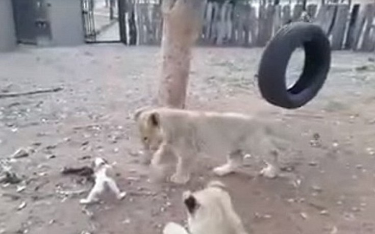Σκύλος ζούγκλα