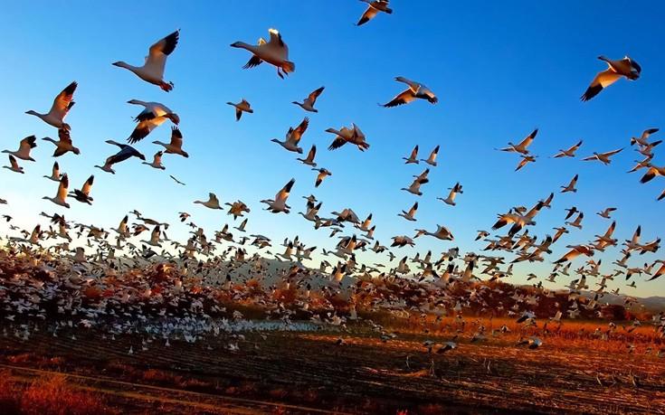 Μέτρα βιοασφάλειας για τη γρίπη των πτηνών