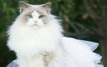 Aurora, η τετράποδη πριγκίπισσα