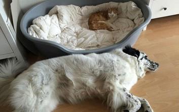 Γάτες που αποδεικνύουν ποιος είναι το αφεντικό σε ένα σπίτι