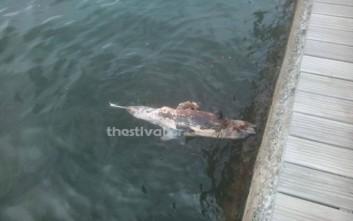 Νεκρό δελφίνι στη Νέα Παραλία της Θεσσαλονίκης
