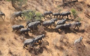 Προς εξαφάνιση βαίνουν οι αφρικανικοί ελέφαντες
