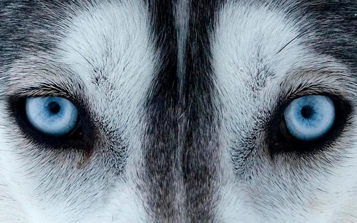 μάτια ζωϊκό βασίλειο ζώα