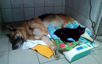 922bcbd61181 γάτα. Ο παράλυτος γάτος-νοσοκόμος και η ιστορία του