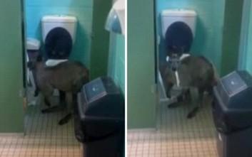 Να τι μπορεί να συναντήσει κανείς σε μια τουαλέτα της Αυστραλίας