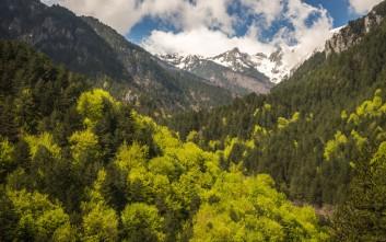 Πώς η ρύπανση «ναρκοθετεί» την υγεία των ευρωπαϊκών δασών