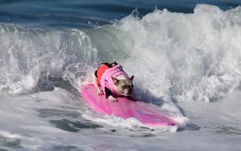 Τα σκυλιά παράτησαν τις γάτες για να κυνηγήσουν... τα κύματα