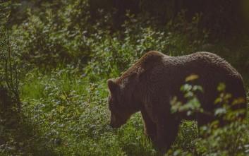 Ο «Αρκτούρος» δημιουργεί Πρότυπο Βαλκανικό Κέντρο Άγριων Σαρκοφάγων