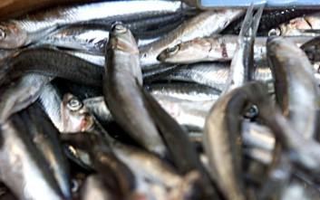 Τι ψάρια επιλέγουν οι Έλληνες εν μέσω κρίσης