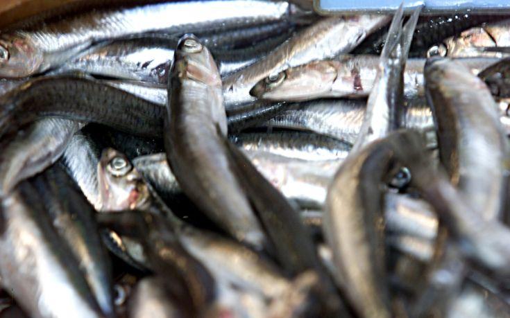 Ελληνικά τα περισσότερα φρέσκα ψάρια που καταλήγουν στο πιάτο μας