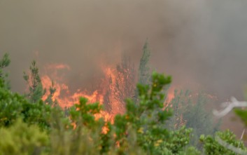 Σε εξέλιξη πυρκαγιά στο Σούλι Λακωνίας
