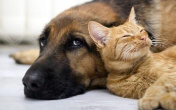 Έξι χρόνια συνεργασίας WIND και Animal Action για τη φροντίδα αδέσποτων ζώων