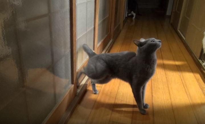 Γάτα με… savoir vivre χτυπάει την πόρτα σαν πολυβόλο