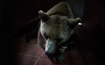 Το θλιβερό εμπόριο των ζωντανών ζώων που γίνεται μέσω του Facebook