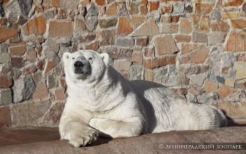 Πέθανε η «βεντέτα» του ζωολογικού κήπου της Αγίας Πετρούπολης