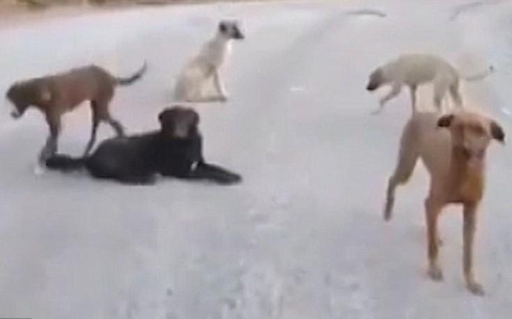 Τουρκία σκύλοι κοιλάδα των εγκαταλελειμμένων σκύλων