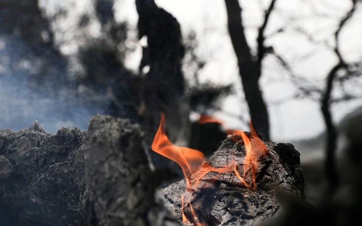 Σε ύφεση η φωτιά στο Βροντερό Φλώρινας