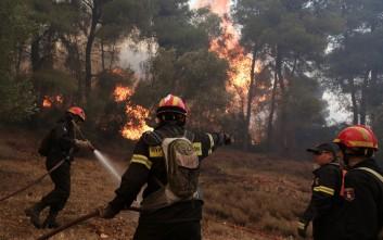 Σε εξέλιξη φωτιά στην Καστάνια Μεσσηνίας