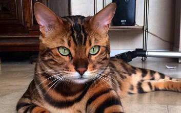 Δέκα από τις ομορφότερες γάτες στον κόσμο