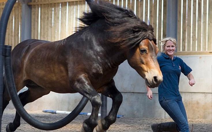 Άλογο γλίτωσε από το σφαγείο κι έγινε πρωταθλητής