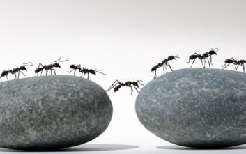 Εξαφανίστε τα μυρμήγκια με φυσικό τρόπο