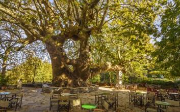 Το ελληνικό χωριό που έχει ένα από τα γηραιότερα πλατάνια της Ευρώπης
