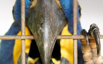 Το πτηνό «ρουφιάνος» που αποκάλυψε τη μοιχεία