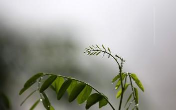 Συννεφιασμένη Κυριακή με λασποβροχή και βροχερή Καθαρά Δευτέρα