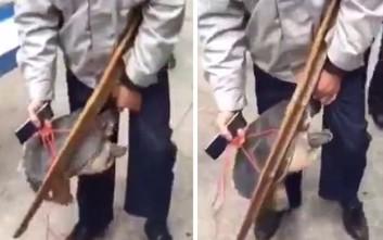 Χελώνα δάγκωσε άνδρα στην περιοχή των γεννητικών οργάνων