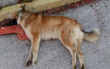 Ηλικιωμένη κατηγορείται για δηλητηρίαση σκύλου στην Αμαλιάδα
