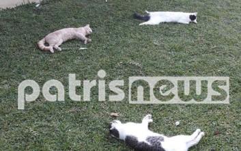Βρήκαν τις γάτες τους νεκρές στην αυλή του σπιτιού τους