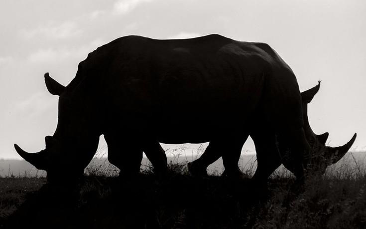 Wildlife21