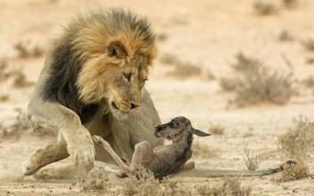 Είκοσι πέντε εντυπωσιακές εικόνες άγριας ζωής που ξεχώρισαν