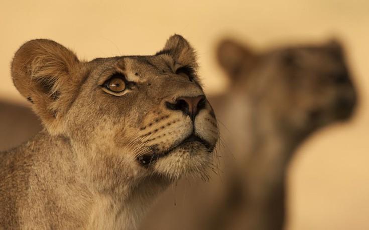 Wildlife8
