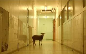 Προσοχή, τα ζώα στην ταινία αυτή πεθαίνουν πραγματικά!