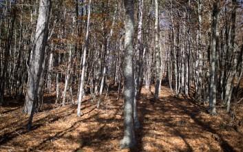 Κτηνωδία στην Τεγέα: Κρέμασαν σκύλο με σύρμα από δέντρο