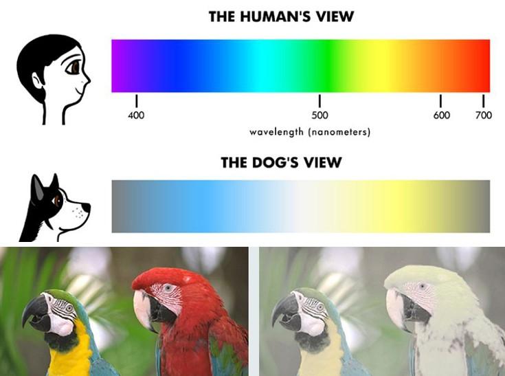 μεγάλο πουλί σκύλα πλήρη βίντεο
